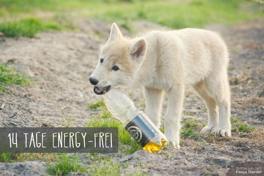 Selbst bei meinem Besuch bei der kleinen Wölfin Naaja konnte ich nicht ohne den Energydrink. Naaja fand eher die Flasche an sich spannend.
