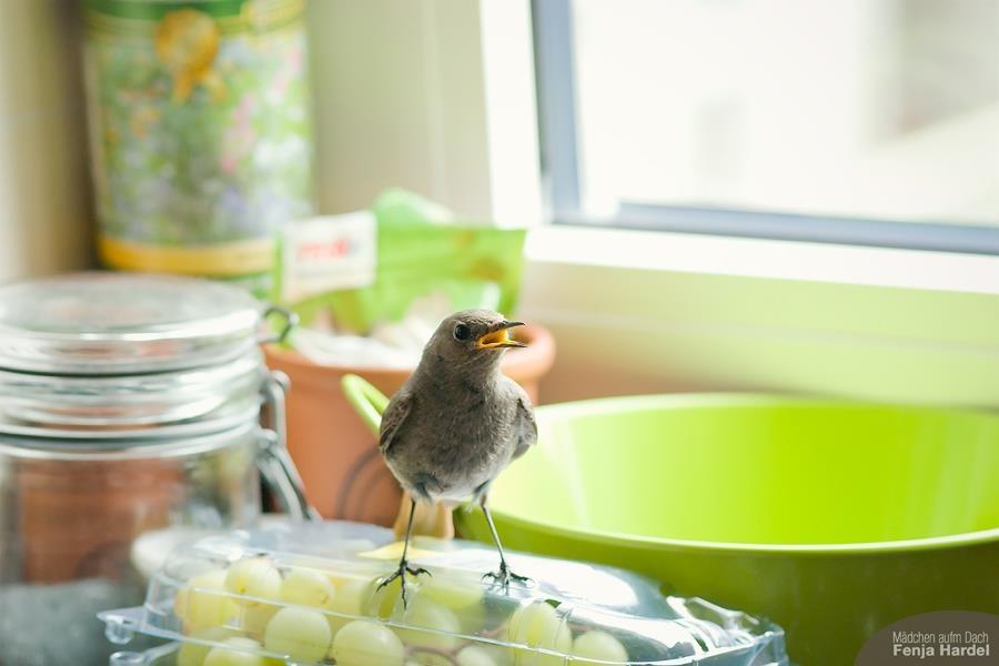 Vogel in der Küche