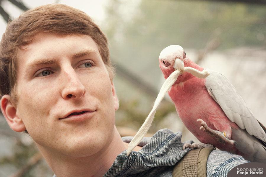 Vogel im Tierpark
